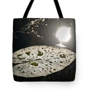 Lily Pad In The Sun Tote Bag
