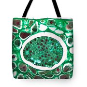 Lily Seed Embryo, Lm Tote Bag