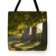 Line Of Maple Trees Along Rural Road In Tote Bag