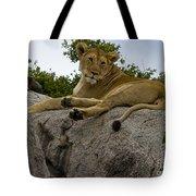 Lion   #1646 Tote Bag
