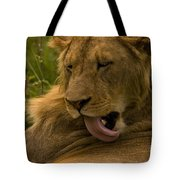 Lion   #9976 Tote Bag