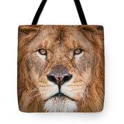 Lion Close Up Tote Bag