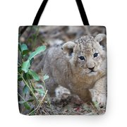 Lion Cub Tote Bag