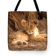 Lion Cub Panthera Leo Tote Bag