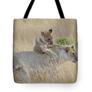 Lion Cub Playing With Female Lion Tote Bag