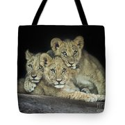 Three Lion Cubs Tote Bag