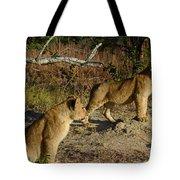 Lion Cubs Of Zimbabwe  Tote Bag