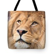 Lion In Deep Thought Tote Bag