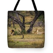 Lion In The Dog House Tote Bag