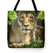 Lion In The Grass Tote Bag