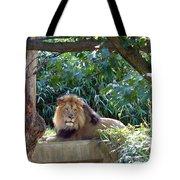 Lion King At Washington Zoo Tote Bag