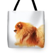 Lion On The Snow Tote Bag