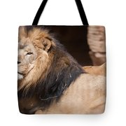 Lion Portrait Of The King Of Beasts Tote Bag