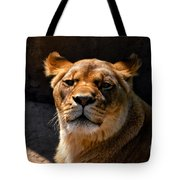 Lioness Hey Are You Looking At Me Tote Bag