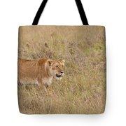 Lioness, Kenya Tote Bag