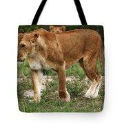 Lioness On The Masai Mara Tote Bag