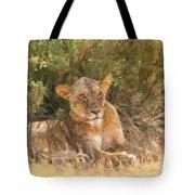 Lioness  Panthera Leo Resting Tote Bag