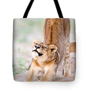 Lioness Panthera Leo Stretching Tote Bag