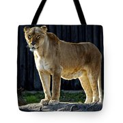 Lioness Tote Bag by Frozen in Time Fine Art Photography