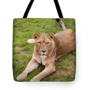 Lioness Sitting In Grass Tote Bag