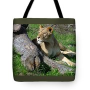 Lioness2 Tote Bag