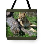 Lioness2 Tote Bag