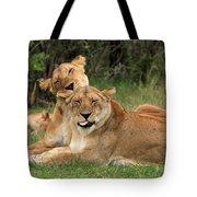 Lions Of The Masai Mara  Tote Bag