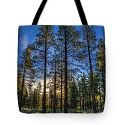 Lit Up Trees Tote Bag