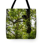 Little Bear Cub In Tree Cades Cove 2 Tote Bag