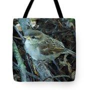Little Bird Waiting Tote Bag