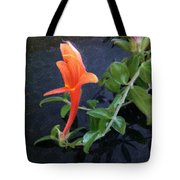 Little Dancing Dolphin Plant Tote Bag