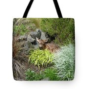 Little Lord Fawnleroy Tote Bag