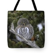 Little One - Northern Pygmy Owl Tote Bag