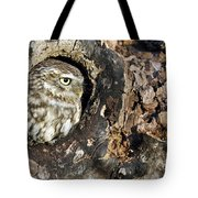 Little Owl 4 Tote Bag