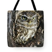 Little Owl 6 Tote Bag