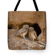 Little Owl Athene Noctua  Tote Bag