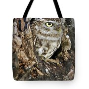 Little Owl In Hollow Tree Tote Bag