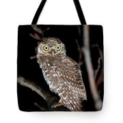 Little Owl Or Spotted Owlet Tote Bag