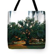 Live Oak Bathed In Evening Light Tote Bag