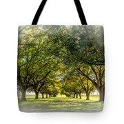 Live Oak Journey Vignette Tote Bag