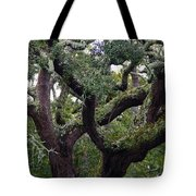 Live Oak Tree Tote Bag