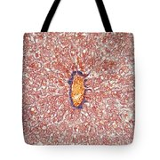 Liver Tissue Of A Cat Lm Tote Bag