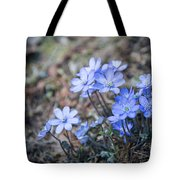 liverleaf II Tote Bag by Hannes Cmarits