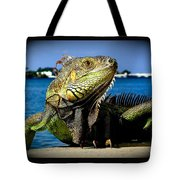 Lizard Sunbathing In Miami Tote Bag