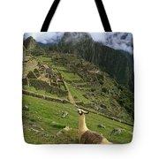 Llama At Machu Picchu Tote Bag