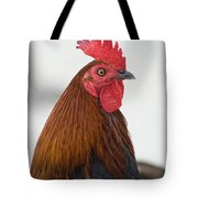 Local Poultry In Key West Tote Bag