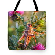 Locust And Thistle 2am-110423 Tote Bag