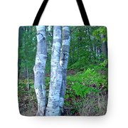 Lone Birch In The Maine Woods Tote Bag