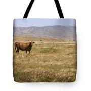 Lone Cow In Grassy Field Tote Bag