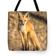 Lone Fox Tote Bag